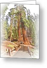 A Walk Among The Giant Sequoias Greeting Card