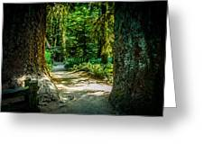 Pathway Cathedral Grove Greeting Card