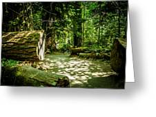 A Walk Among The Giants Collection 3 Greeting Card