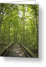 A Walk In Nature.  Greeting Card