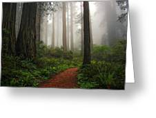 A Walk In The Fog Greeting Card
