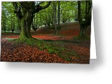A Walk In The Forest Greeting Card