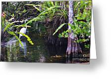 A Walk In The Glades Greeting Card
