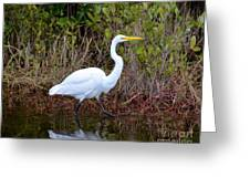 A Walk In The Wetlands Greeting Card