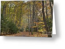 A Walk In The Woods II Greeting Card
