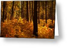 A Walk Through The Woods  Greeting Card
