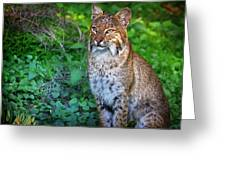 A Watchful Eye Greeting Card by Mark Andrew Thomas