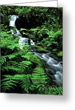 A Waterfall In Redwood National Park Greeting Card