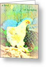 A Wet Hen In Its Own Little Paradise  Greeting Card