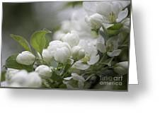 A Whisper Of Spring Greeting Card