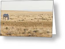 A White Mustang Feeds On Dry Grass Fields Of Arizona Greeting Card