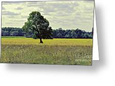 A Wind Blown Tree On The Prairie Greeting Card