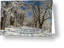 A Winter Road Greeting Card