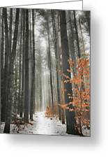 A Winters Path Greeting Card by Bill Wakeley