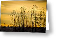 A Winter's Silhouette Greeting Card