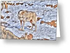 A Wolf In Winter Greeting Card by Skye Ryan-Evans