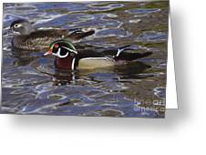 A Wood Duck Pair  Greeting Card