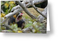 A Yawning Mandrill  Greeting Card