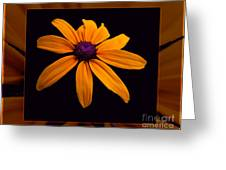 A Yellow Burst Of Sunshine Floral Photography Greeting Card