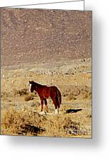 A Young Mustang Greeting Card