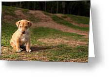 Abandoned Puppy Greeting Card
