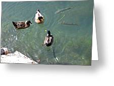 Above And Below Greeting Card by Rod Jones