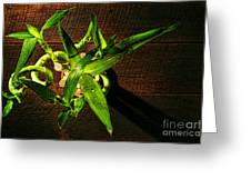 Above The Bamboo Greeting Card