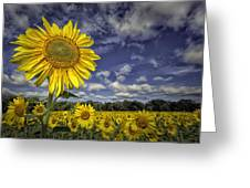Above Them All Greeting Card