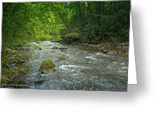 Abram's Creek Gsmnp Greeting Card