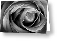 Absence Of Color Greeting Card