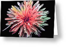 Abstract Chrysanthemum Greeting Card