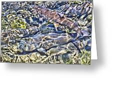 Abstract Fish 3 Greeting Card
