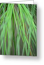 Abstract Green Pine Greeting Card