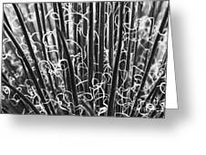 Abstract In Black And White Greeting Card