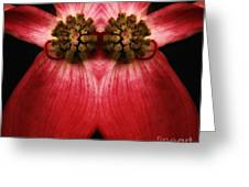 Nature In Abstract Dogwood Blossom 2 Greeting Card