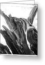 Abstract Of A Fallen Tree Root Greeting Card