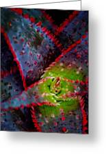 Abstract Of Bromeliad Greeting Card