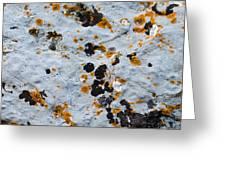 Abstract Orange Lichen 1 Greeting Card
