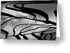 Abstract Pattern Bw Greeting Card