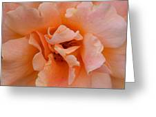 Abstract Peach Rose Greeting Card