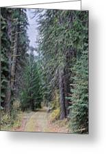 Abstract Road In The Wilderness Greeting Card