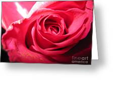 Abstract Rose 4 Greeting Card
