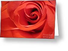 Abstract Orange Rose 9 Greeting Card