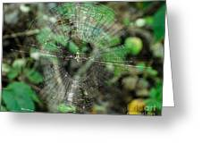Abstract Spider Web Greeting Card
