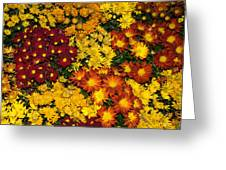 Abundance Of Yellows Reds And Oranges Greeting Card