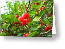 Abundant Reds Greeting Card