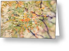Acacia In Warm Colors Greeting Card