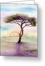 Acacia Sunrise Greeting Card