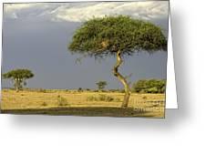 Acacia Trees On Serengeti Greeting Card