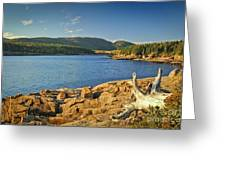 Acadia  Greeting Card